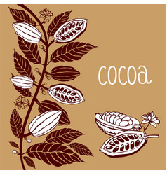 Cacao beans plant exotic cacao plants vector