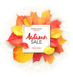 Sale banner with bright autumn leaves vector