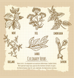 vintage culinary herbs information poster design vector image