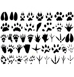 animal track print silhouettes vector image