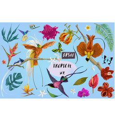 Bright tropican birds and flowers vector