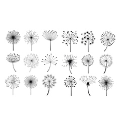 Dandelion fluffy seeds flowers set vector