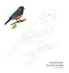 Scarlet bellied mountain tanager draw vector image vector image