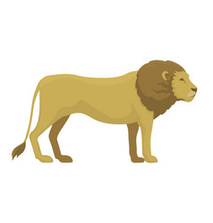 Cute safari lion cartoon vector
