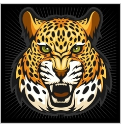 jaguar portrait Jaguars head on black vector image