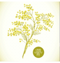 Sprig of Mimosa Spring Background vector image