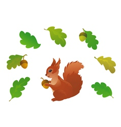 Squirrel and oak leaves vector image