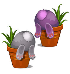 bunny looking for something in flower pot vector image vector image