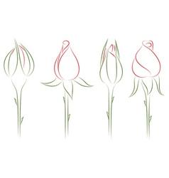 rosebuds vector image