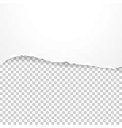 Torn paper banner on the transparent background vector image