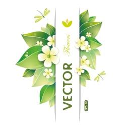 jasmin flowers vector image vector image