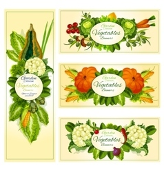 Fresh vegetable banner set with copy space vector image