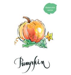 Watercolor orange pumpkin vector