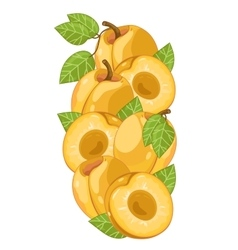 Apricot isolated composition vector image vector image