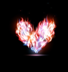 Human heart in flames vector