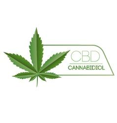 Cbd marijuana plant leaf vector