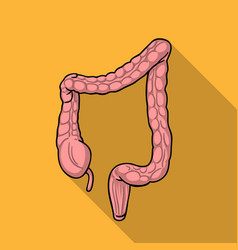 human large intestine icon in flat style isolated vector image