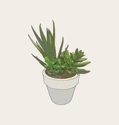ndoor plants in pots vector image