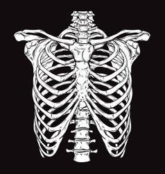 Hand drawn line art human ribcage vector