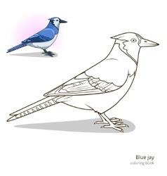 Blue jay bird coloring book vector