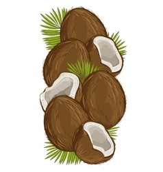 Coconut isolated  nut composition vector