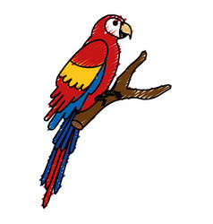 Exotic parrot in branch tropical bird vector