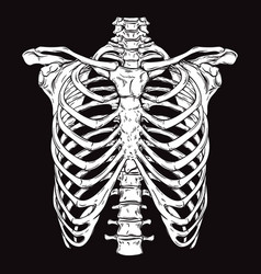hand drawn line art human ribcage vector image
