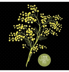 Sprig of mimosa spring background vector