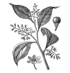 Camphor floral engraving vector