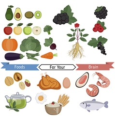 Food for brain and health vector