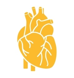 Heart organ human isolated icon vector