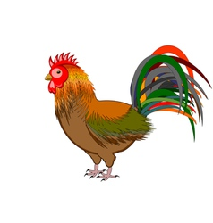 A beautiful rooster isolated on a white background vector image