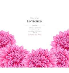 Blooming beautiful aster flower vector image