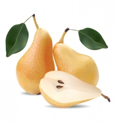 pears and leaves vector image