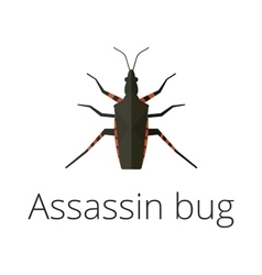Assassin bug insect vector