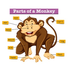 Diagram showing parts of monkey vector image vector image