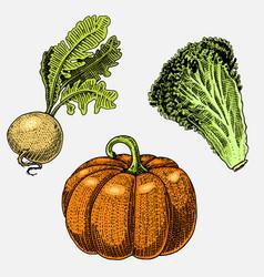 Set of hand drawn engraved vegetables vegetarian vector