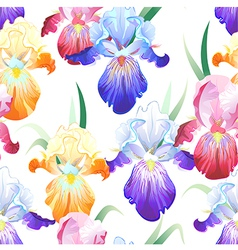 White seamless pattern with iris flowers vector