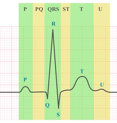 Ecg on grid paper vector