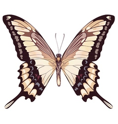 Isolated light butterfly vector