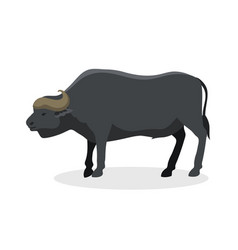 Bull farm animal safari male standing vector