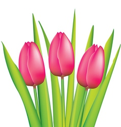 bunch of pink tulips vector image