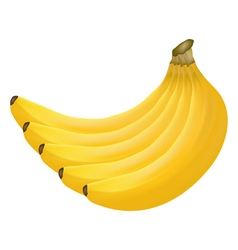 bananas on white background vector image