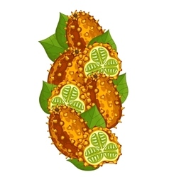 Horned melon isolated  composition vector