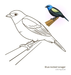 Blue necked tanager color book vector image vector image