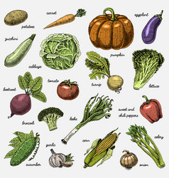 set of hand drawn engraved vegetables vegetarian vector image