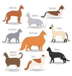 Different cat breeds cute kitty pet cartoon cute vector