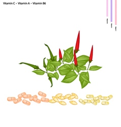 Chili peppers with vitamin c a and b6 vector