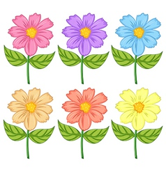 Six colorful flowers vector image vector image