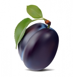 plum and leaves vector image